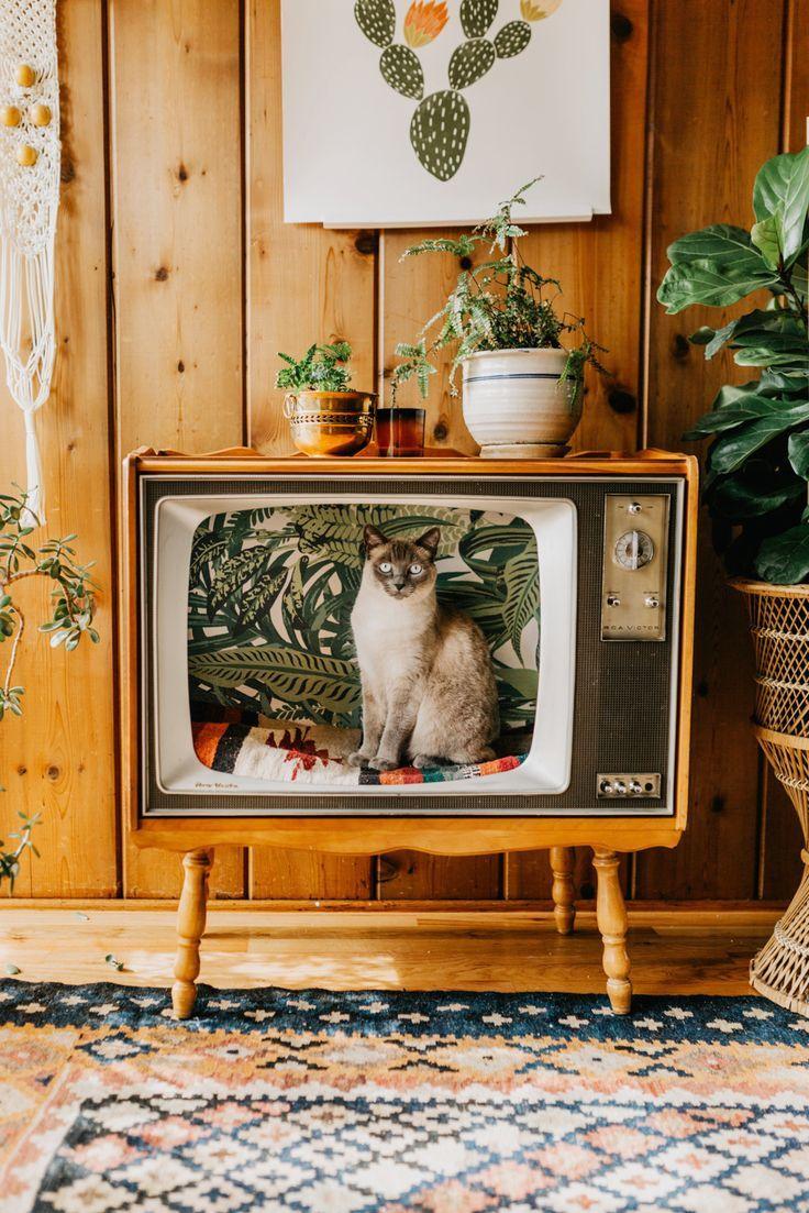 Eski Televizyonlar Kedi Yatagi Oldu1