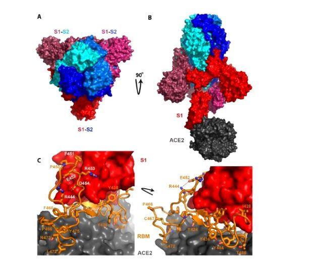 koronavirus-insan-yapimi-diyen-cinli-virolog