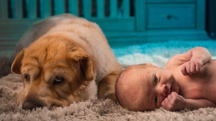 İlk tanisma Kedi ve kopeginizi yeni dogan bebeginizle tanistirmak icin oneriler
